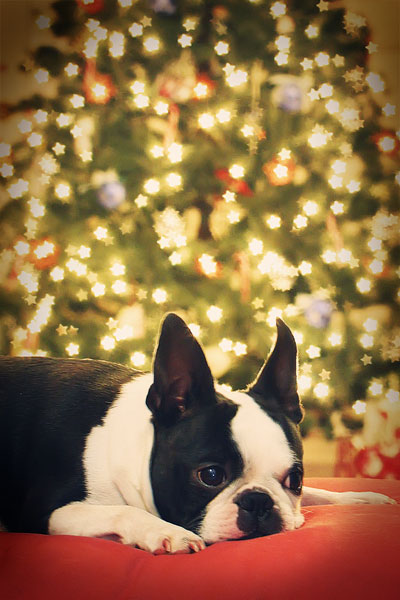 Christmas Tree Custom Bokeh Stars