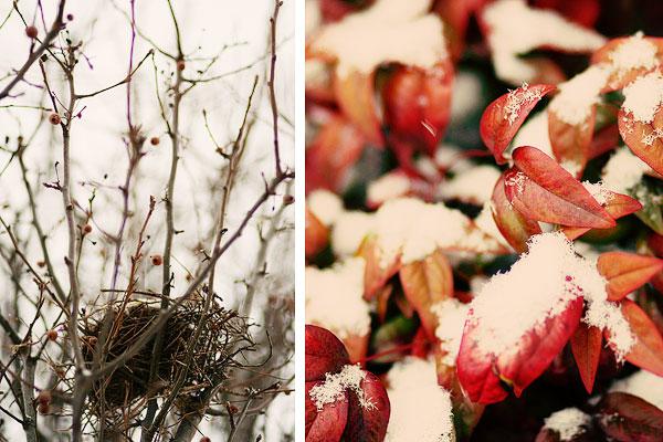 snow tree branches bird's nest collage