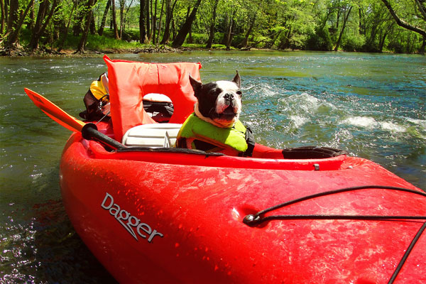 Kayaking on Flint Creek @ Wheeler National Wildlife Refuge & on the Flint River, Huntsville Alabama