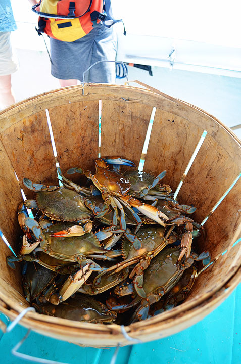 04-crab-and-crawfish-maggy-456