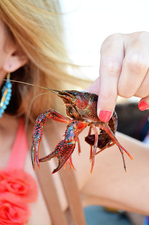 20-crab-and-crawfish-maggy-546