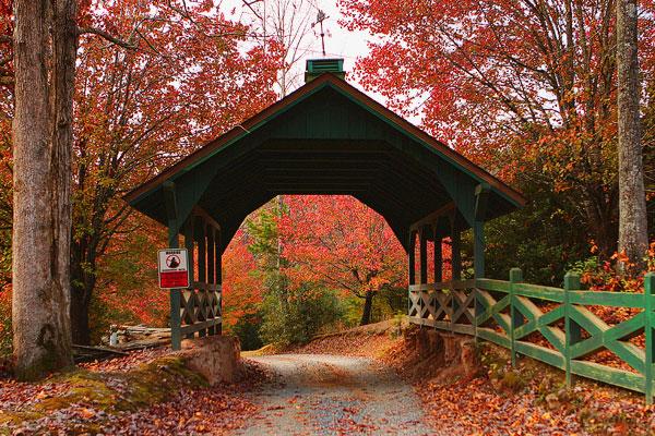 Foliage in Blue Ridge, Georgia