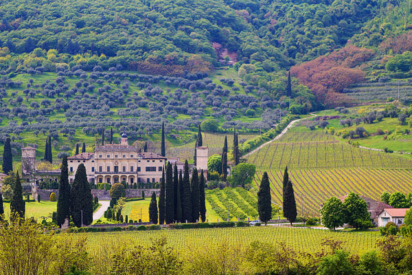 Redoro Olive Oil Orchard and Vineyard in Verona Italy