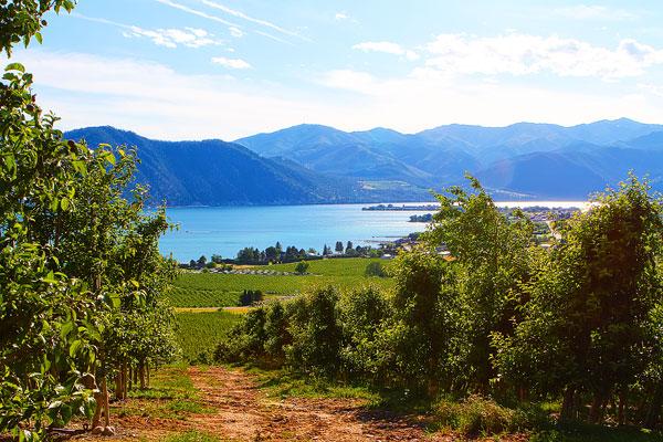 Benson Vineyards on Lake Chelan, Washington State