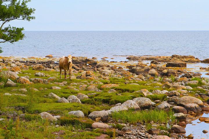 Biking Adventure in Osterlen   Discovering Sweden's Beautiful Countryside