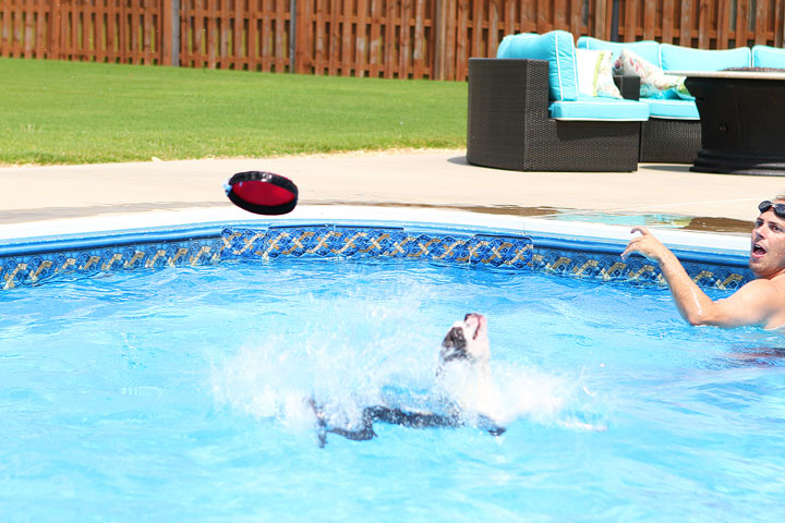 Boston Terrier Catching Frisbee off the Diving Board -- Photo 7