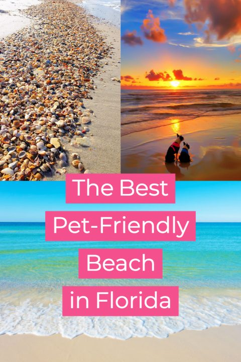 The Best Pet-Friendly Dog Beach in Florida! Cape San Blas, near Port Saint Joe on the panhandle. Just one hour from Panama City!