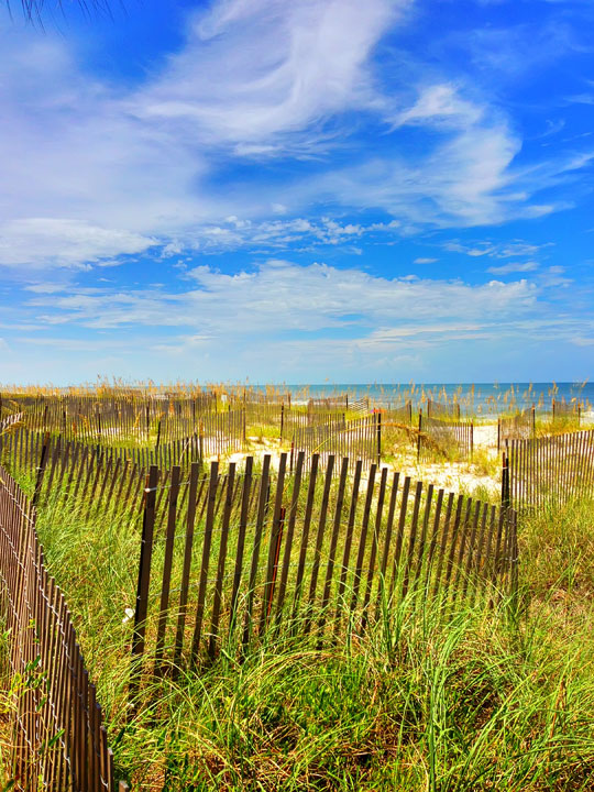 cape-san-blas-florida-pet-friendly-beach-vacation-2013-12