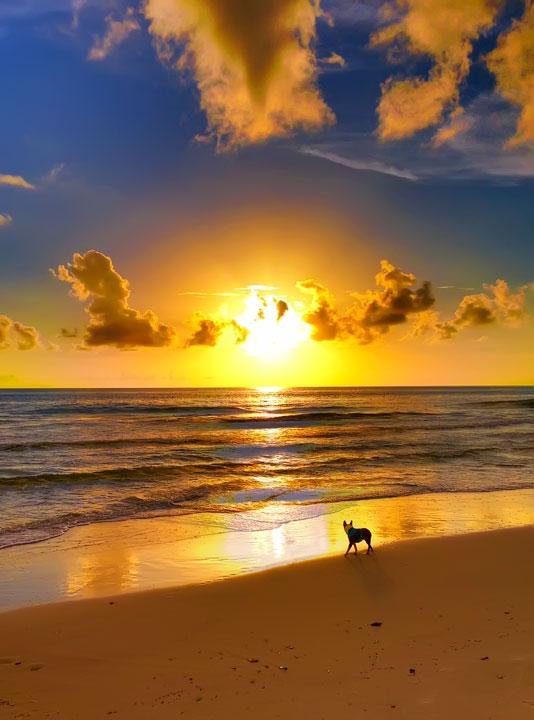 cape-san-blas-florida-pet-friendly-beach-vacation-2013-19