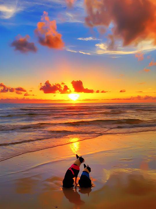 cape-san-blas-florida-pet-friendly-beach-vacation-2013-20