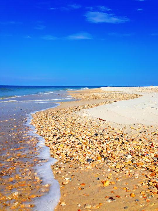 cape-san-blas-florida-pet-friendly-beach-vacation-2013-21