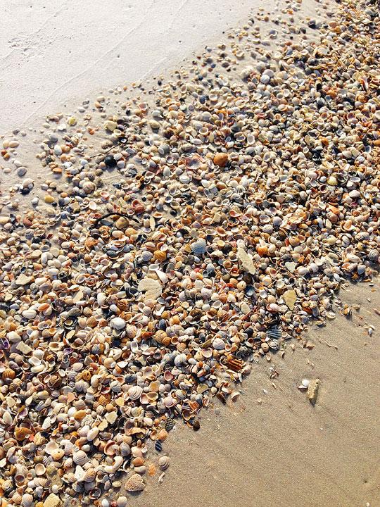 cape-san-blas-florida-pet-friendly-beach-vacation-2013-22
