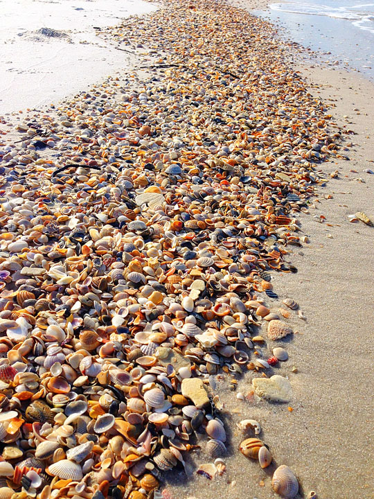 cape-san-blas-florida-pet-friendly-beach-vacation-2013-23