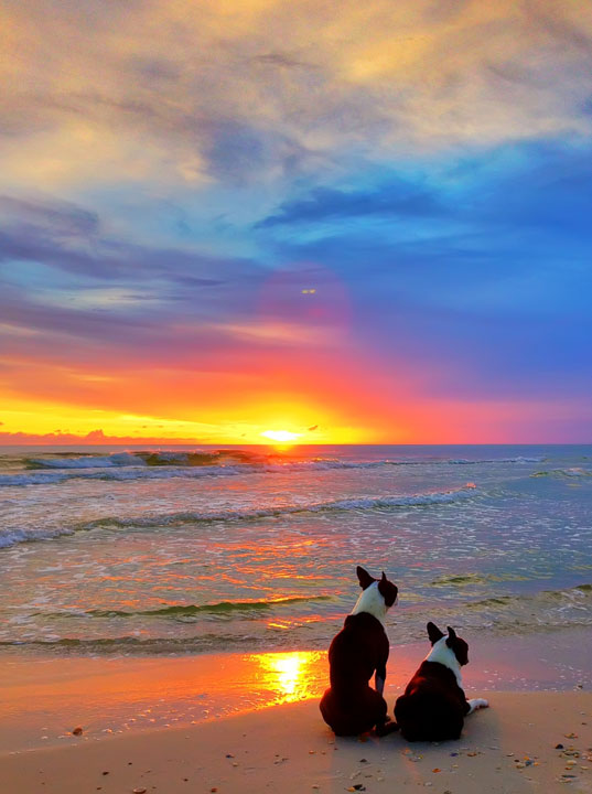 cape-san-blas-florida-pet-friendly-beach-vacation-2013-28
