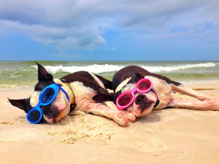 cape-san-blas-florida-pet-friendly-beach-vacation-2013-38