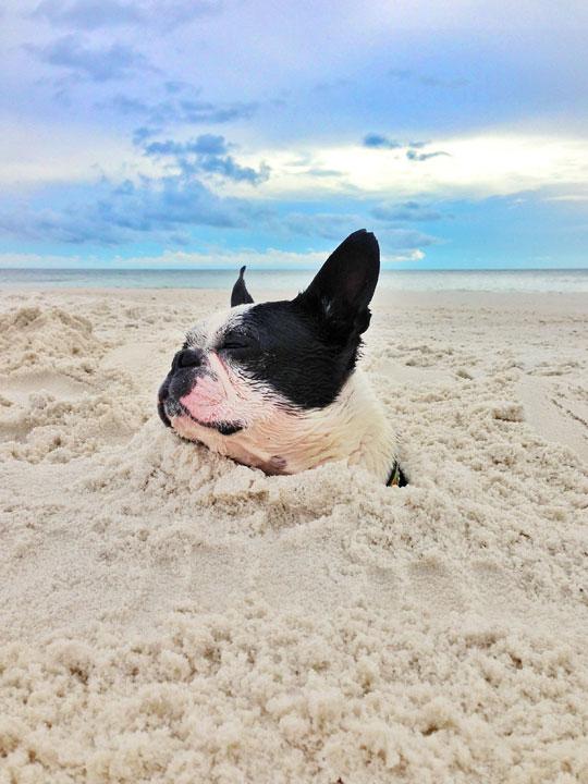 cape-san-blas-florida-pet-friendly-beach-vacation-2013-40
