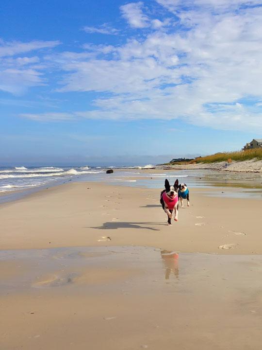 cape-san-blas-florida-pet-friendly-beach-vacation-2013-5