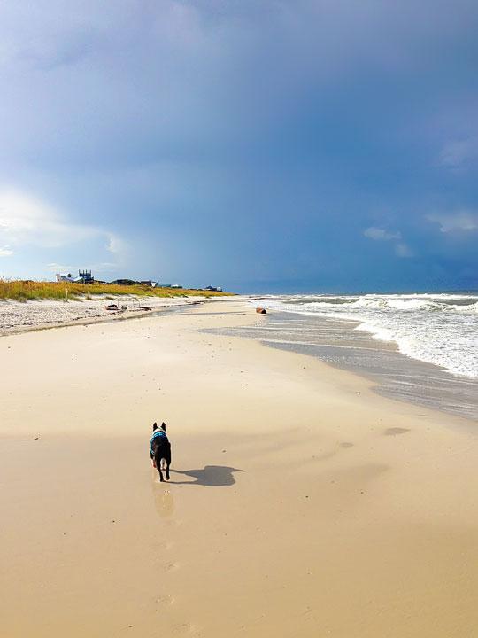 cape-san-blas-florida-pet-friendly-beach-vacation-2013-6