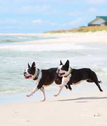 Image of Miley and Howie Taking a Stroll in the Sand