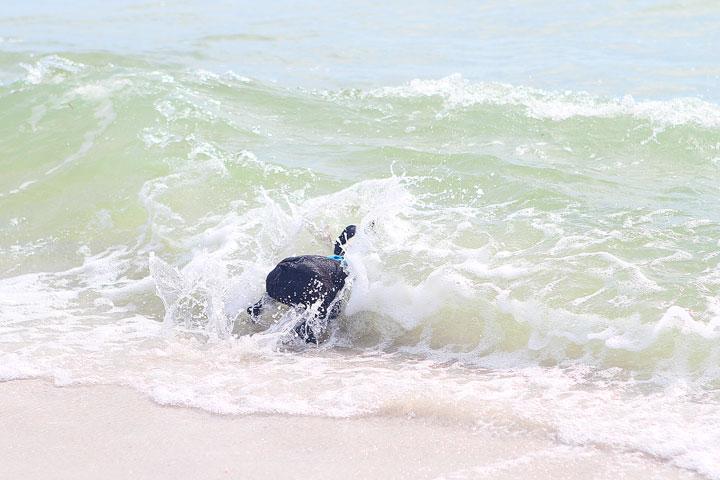 pet-friendly-off-leash-dog-beach-vacation-cape-san-blas-florida-panhandle-10