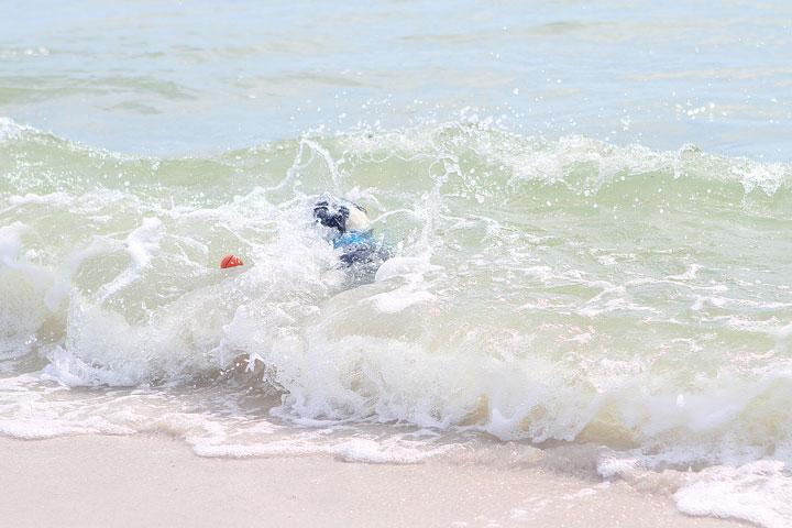 pet-friendly-off-leash-dog-beach-vacation-cape-san-blas-florida-panhandle-12