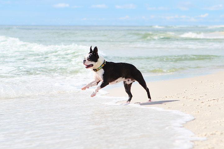 pet-friendly-off-leash-dog-beach-vacation-cape-san-blas-florida-panhandle-13