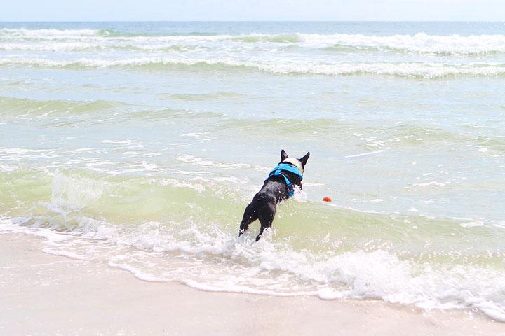 pet-friendly-off-leash-dog-beach-vacation-cape-san-blas-florida-panhandle-14