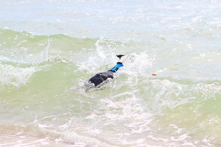 pet-friendly-off-leash-dog-beach-vacation-cape-san-blas-florida-panhandle-15