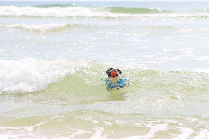 pet-friendly-off-leash-dog-beach-vacation-cape-san-blas-florida-panhandle-16