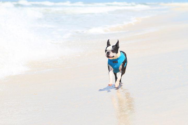 pet-friendly-off-leash-dog-beach-vacation-cape-san-blas-florida-panhandle-17