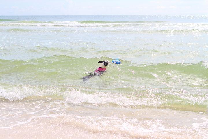 pet-friendly-off-leash-dog-beach-vacation-cape-san-blas-florida-panhandle-18