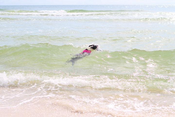 pet-friendly-off-leash-dog-beach-vacation-cape-san-blas-florida-panhandle-19