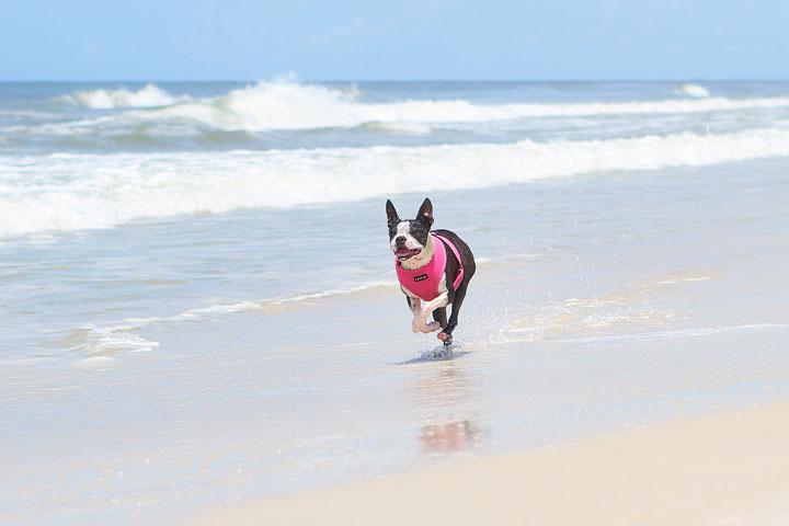 pet-friendly-off-leash-dog-beach-vacation-cape-san-blas-florida-panhandle-2