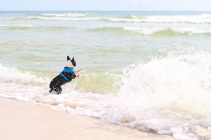 pet-friendly-off-leash-dog-beach-vacation-cape-san-blas-florida-panhandle-20