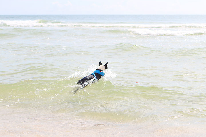 pet-friendly-off-leash-dog-beach-vacation-cape-san-blas-florida-panhandle-21