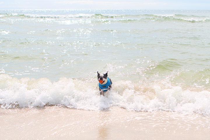 pet-friendly-off-leash-dog-beach-vacation-cape-san-blas-florida-panhandle-22