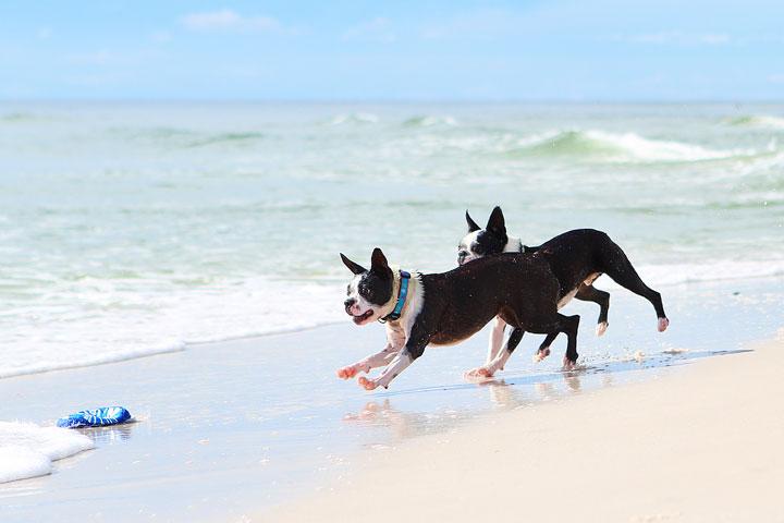 pet-friendly-off-leash-dog-beach-vacation-cape-san-blas-florida-panhandle-24
