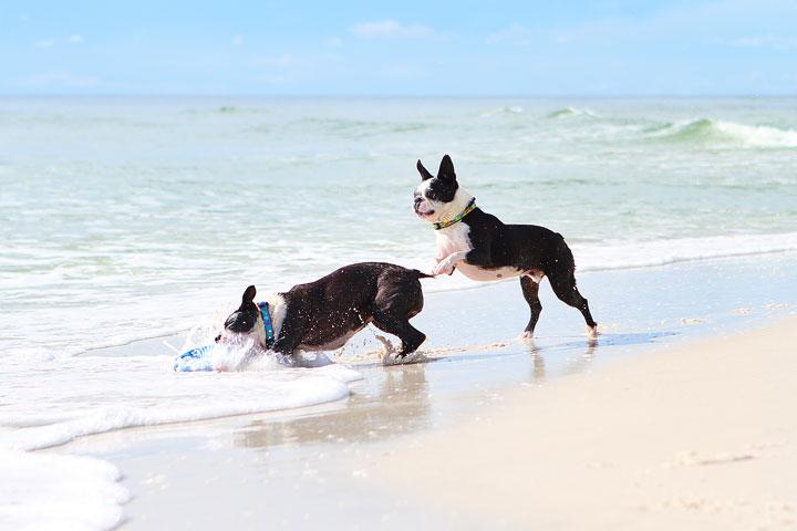pet-friendly-off-leash-dog-beach-vacation-cape-san-blas-florida-panhandle-25