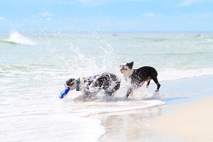 pet-friendly-off-leash-dog-beach-vacation-cape-san-blas-florida-panhandle-26