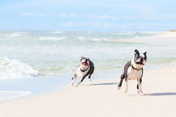 pet-friendly-off-leash-dog-beach-vacation-cape-san-blas-florida-panhandle-27