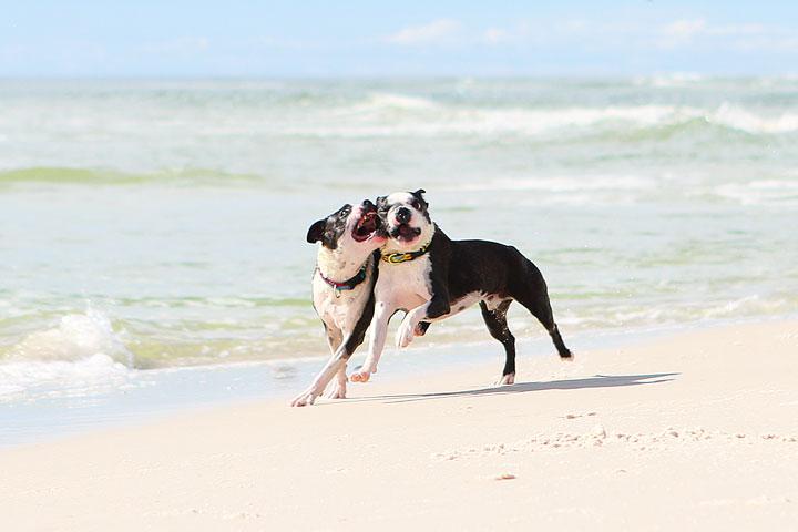 pet-friendly-off-leash-dog-beach-vacation-cape-san-blas-florida-panhandle-28