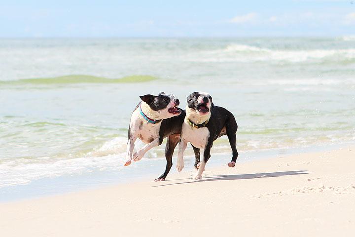 pet-friendly-off-leash-dog-beach-vacation-cape-san-blas-florida-panhandle-29