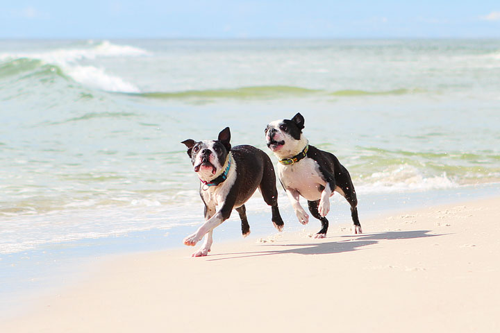 pet-friendly-off-leash-dog-beach-vacation-cape-san-blas-florida-panhandle-30