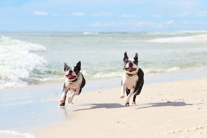 pet-friendly-off-leash-dog-beach-vacation-cape-san-blas-florida-panhandle-31