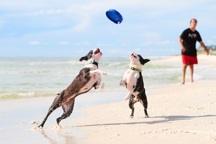 pet-friendly-off-leash-dog-beach-vacation-cape-san-blas-florida-panhandle-32