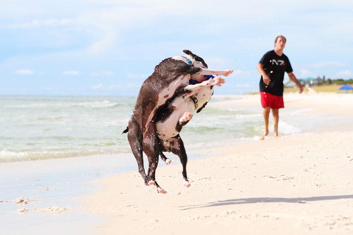pet-friendly-off-leash-dog-beach-vacation-cape-san-blas-florida-panhandle-33