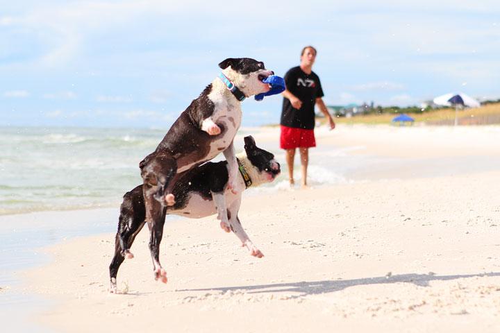 pet-friendly-off-leash-dog-beach-vacation-cape-san-blas-florida-panhandle-34