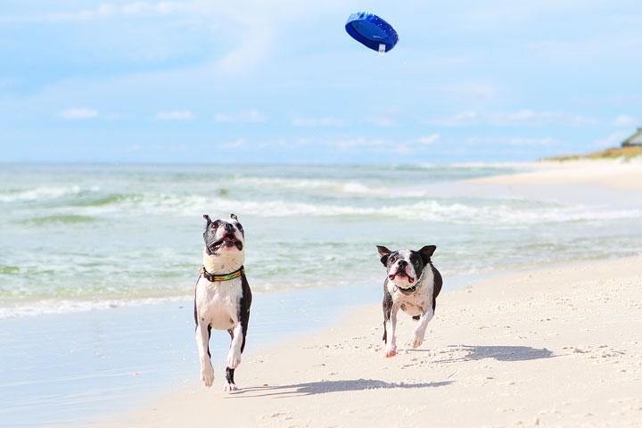 pet-friendly-off-leash-dog-beach-vacation-cape-san-blas-florida-panhandle-35
