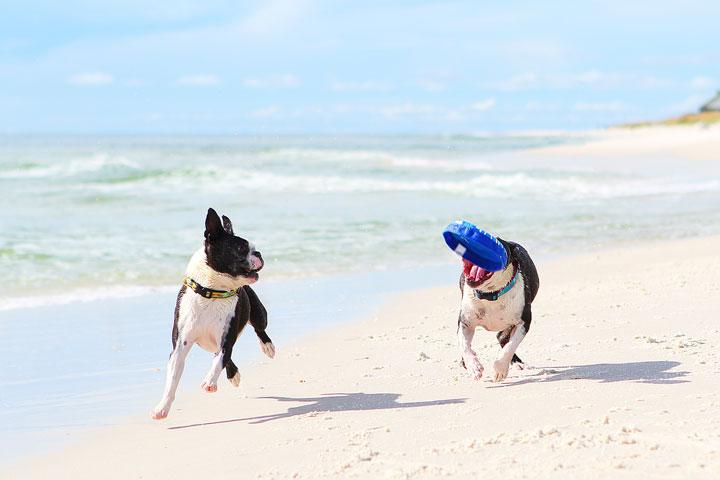 pet-friendly-off-leash-dog-beach-vacation-cape-san-blas-florida-panhandle-36