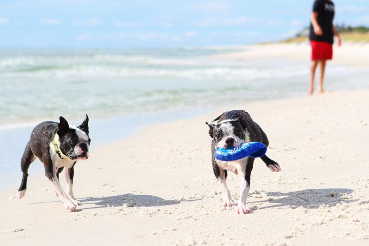 pet-friendly-off-leash-dog-beach-vacation-cape-san-blas-florida-panhandle-37